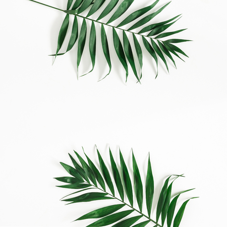 Tropical palm leaves on white background. Summer concept. Flat lay, top view, copy space, square Фото со стока