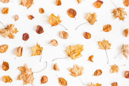 Autumn composition. Pattern made of autumn dried leaves on white background. Flat lay, top view Reklamní fotografie