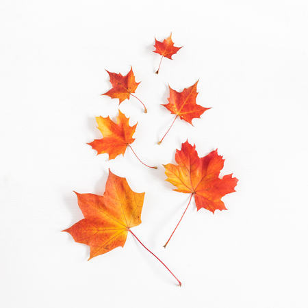 Autumn composition. Pattern made of autumn maple leaves on white background. Flat lay, top view, square
