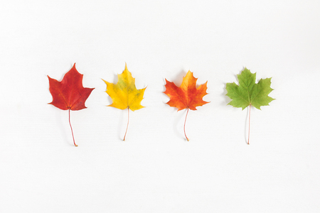 Autumn composition. Pattern made of autumn maple leaves on white background. Flat lay, top view Stockfoto