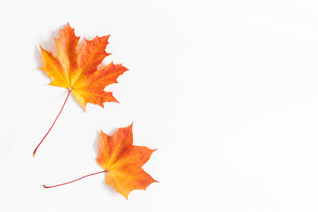 Autumn maple leaves on white background. Flat lay, top view, copy space Stock Photo