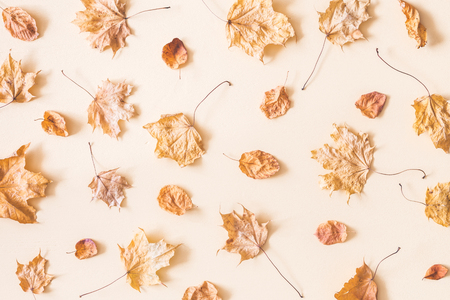 Autumn composition. Pattern made of autumn dried leaves on pastel beige background. Flat lay, top view Reklamní fotografie