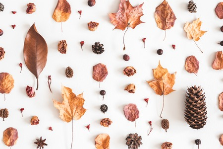 Autumn composition. Pattern made of flowers, dried leaves on white background. Autumn, fall concept. Flat lay, top view Standard-Bild - 106707348