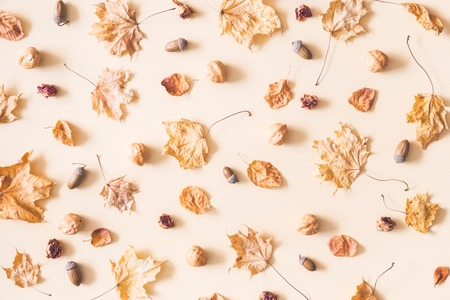 Autumn composition. Pattern made of autumn dried leaves, nuts, acorns on pastel beige background. Flat lay, top view