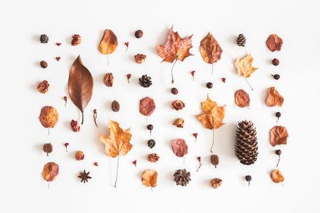 가을 구성. 꽃, 흰색 바탕에 말린 된 잎의 만든 패턴입니다. 가을, 가을 개념. 평면 위치, 평면도