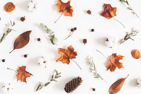 Autumn composition. Pattern made of eucalyptus branches, cotton flowers, dried leaves on white background. Autumn, fall concept. Flat lay, top view Standard-Bild - 106707597