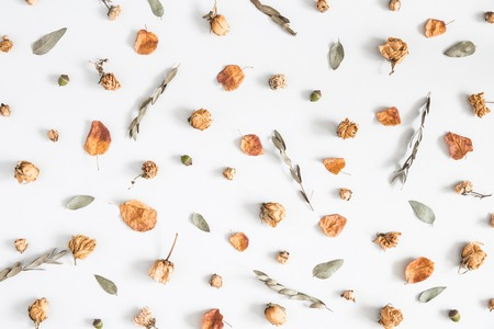 Autumn composition. Pattern made of eucalyptus branches, dried flowers and leaves on pastel gray background. Autumn, fall concept. Flat lay, top view