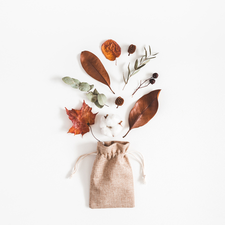 Autumn composition. Eucalyptus branches, cotton flowers, dried leaves on white background. Autumn, fall concept. Flat lay, top view, square