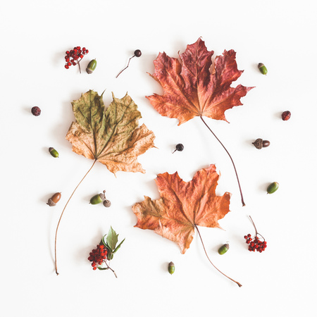 Autumn composition. Pattern made of dried autumn maple leaves on white background. Flat lay, top view, square 免版税图像 - 114237790