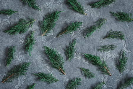 Cypress branches on black background. Flat lay, top view