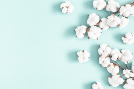 Flowers composition. Cotton flowers on pastel blue background. Flat lay, top view, copy space