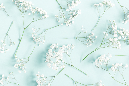 Flowers composition. Gypsophila flowers on pastel blue background. Flat lay, top view