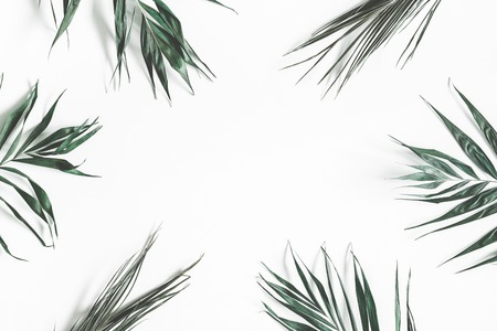 Green palm leaves on white background. Summer, nature concept. Flat lay, top view, copy space