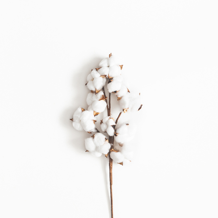 Flowers composition. Cotton flowers on white background. Flat lay, top view, square Archivio Fotografico - 117684421
