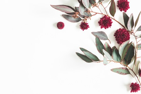 Flowers composition. Eucalyptus leaves and red flowers on white background. Flat lay, top view, copy space Standard-Bild - 118932229