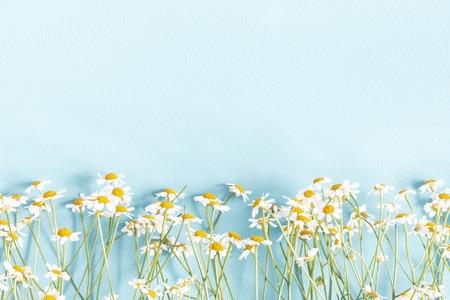 Kompozycja kwiatów. Kwiaty rumianku na pastelowym niebieskim tle. Koncepcja wiosna, lato. Płaski układanie, widok z góry, kopia przestrzeń