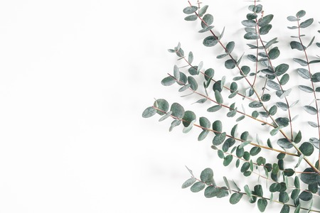 Eucalyptus leaves on white background. Frame made of eucalyptus branches. Flat lay, top view, copy space Stock fotó