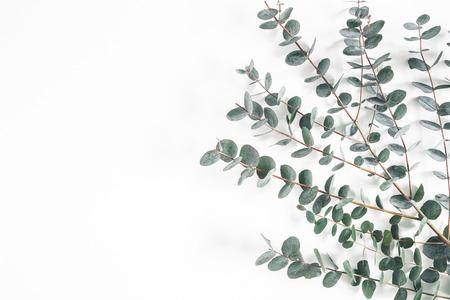 Feuilles d'eucalyptus sur fond blanc. Cadre en branches d'eucalyptus. Mise à plat, vue de dessus, espace copie Banque d'images
