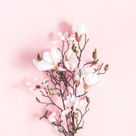Flowers composition. Magnolia flowers on pastel pink background. Flat lay, top view