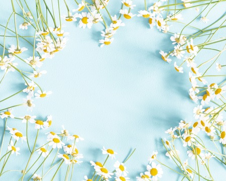 Flowers composition. Chamomile flowers on pastel blue background. Spring, summer concept. Flat lay, top view, copy space Stock Photo