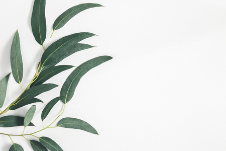 Eucalyptus leaves on pastel gray background. Pattern made of eucalyptus branches. Flat lay, top view, copy space