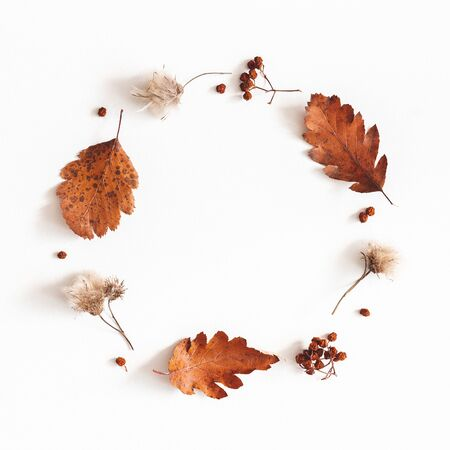 Autumn composition. Wreath made of dried leaves, flowers, rowan berries on white background. Autumn, fall, thanksgiving day concept. Flat lay, top view, copy space, square 写真素材