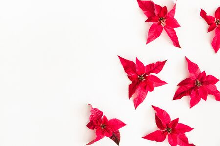 Christmas composition. Frame made of christmas poinsettia on white background. Top view, flat lay, copy space Stock Photo