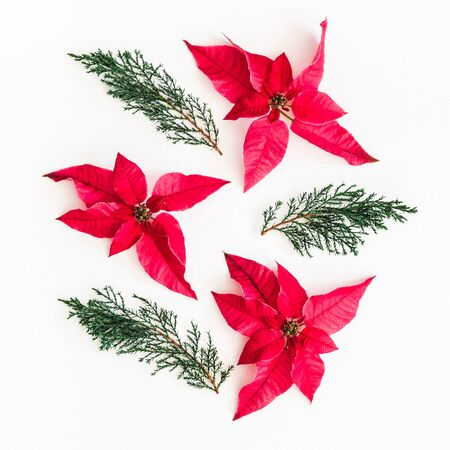 Christmas composition. Christmas poinsettia and fir branches on white background. Top view, flat lay