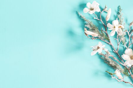 Christmas composition. Fir tree branches, flowers on pastel blue background. Christmas, winter, new year concept. Flat lay, top view, copy space Zdjęcie Seryjne