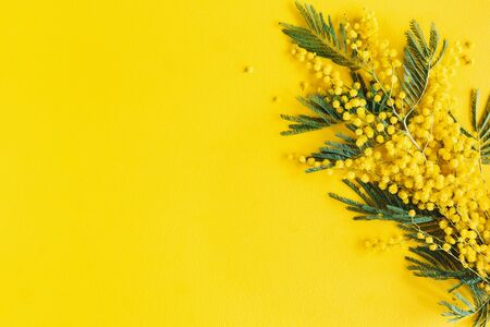 Flowers composition. Mimosa flowers on yellow background. Spring concept. Flat lay, top view