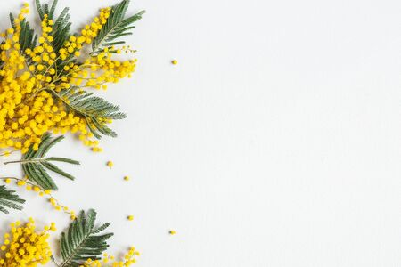 Flowers composition. Mimosa flowers on gray background. Spring concept. Flat lay, top view Reklamní fotografie