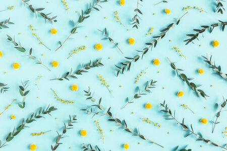 Flowers composition. Yellow flowers, eucalyptus branches on blue background. Spring concept. Flat lay, top view