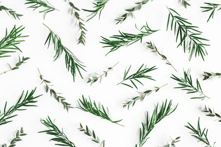 Flowers composition. Pattern made of eucalyptus leaves on white background. Flat lay, top view