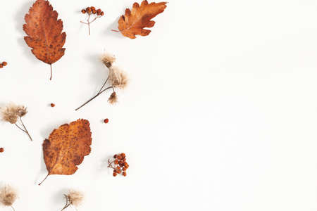 Autumn composition. Dried leaves, flowers, rowan berries on white background. Autumn, fall, thanksgiving day concept. Flat lay, top view