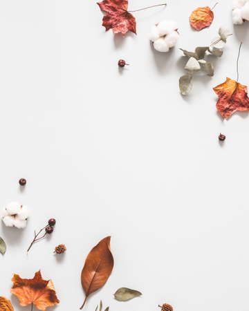 Autumn composition. Frame made of eucalyptus branches, cotton flowers, dried leaves on pastel gray background. Autumn, fall concept. Flat lay, top view Stock fotó - 152481293