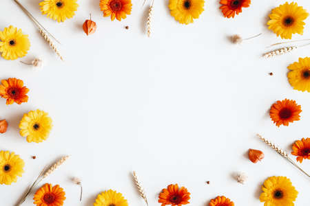 Autumn composition. Gerbera flowers, spica ears on white background. Autumn, fall concept. Flat lay, top view