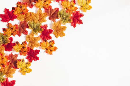 Autumn composition. Frame made of maple leaves on white background. Autumn, fall, thanksgiving day concept. Flat lay, top view
