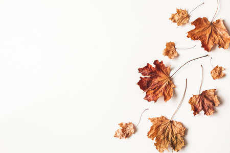 Autumn composition. Dried maple leaves on white background. Autumn, fall, thanksgiving day concept. Flat lay, top view Stock fotó