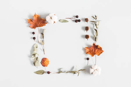 Autumn composition. Frame made of eucalyptus branches, cotton flowers, dried leaves on pastel gray background. Autumn, fall concept. Flat lay, top view