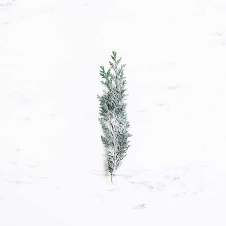 Christmas composition. Fir tree branch on marble background. Christmas, winter, new year concept. Flat lay, top view