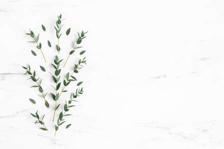 Eucalyptus leaves on marble background. Pattern made of eucalyptus branches. Flat lay, top view