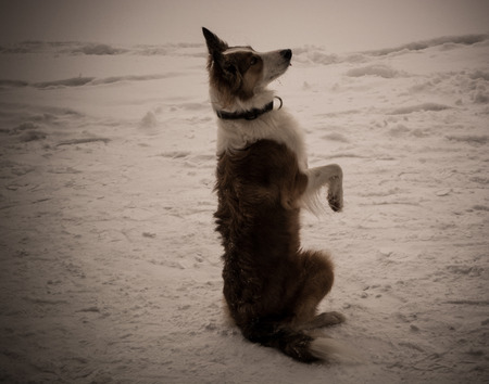 hind: dog ask the food on hind legs