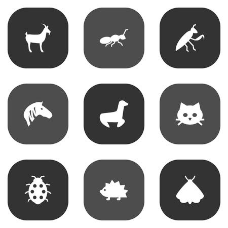 Ensemble d'icônes de Zoo Set.Collection de Porc-épic, sauterelle, chatte et autres éléments. Banque d'images - 92089350