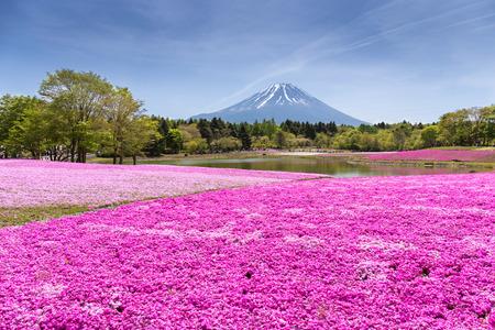 山富士山梨、日本富士山フォーカスと桜や桜の花のピンクのコケのフィールドを持つ日本芝桜祭り