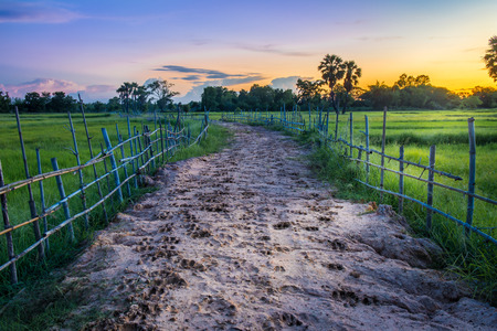 spoor: Landscape of soil road with spoor animals and bamboo in nature around Jasmine rice and toddy palm tree in twilight time, sun light to the ground at countryside Thailand Stock Photo