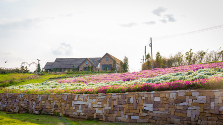 Landscape of blooming pink and white flower field with beautiful house on mountain under the red colors of the summer sunset.