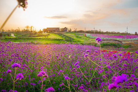 Landscape of blooming lavender flower field with beautiful house on mountain under the red colors of the summer sunset. Reklamní fotografie