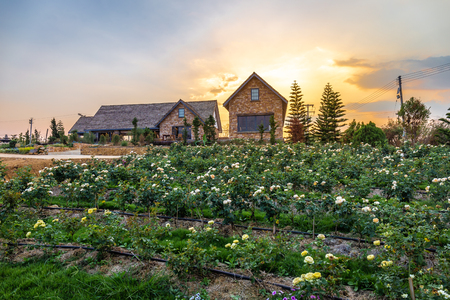 Landscape of blooming rose graden with beautiful house on mountain under the red colors of the summer sunset.