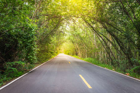 The road in the forest that is a mountain tunnel in Nakhon Ratchasima, Thailand Banco de Imagens