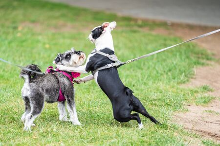 Dogs on lead playing together.